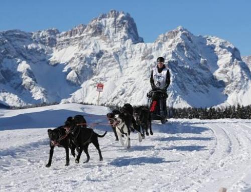 Alpentrail 2017 findet doch statt