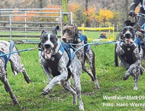 8. Schlittenhunderennen Senne 2016 am 29. und 30. Oktober 2016
