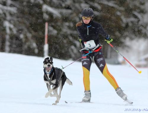Skating- und Skijöringlehrgang