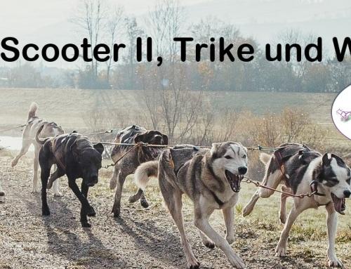 Trainingslager für Gespannfahrer von DogS+