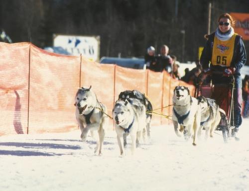 RSSV DRYLAND Schlittenhunderennen Eich / 15. und  16. Dezember 2018