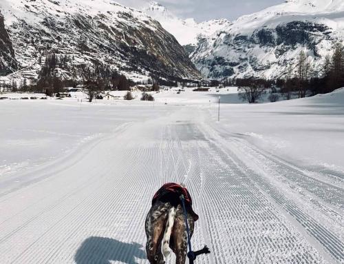 Bericht zur IFSS WM SNOW 2019 in Bessans/France