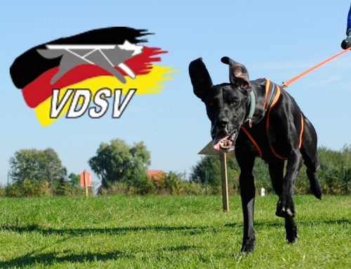 Better-Mushing Seminar des HSV Sparta Süßen am 10.10.2020 in 69207 Sandhausen