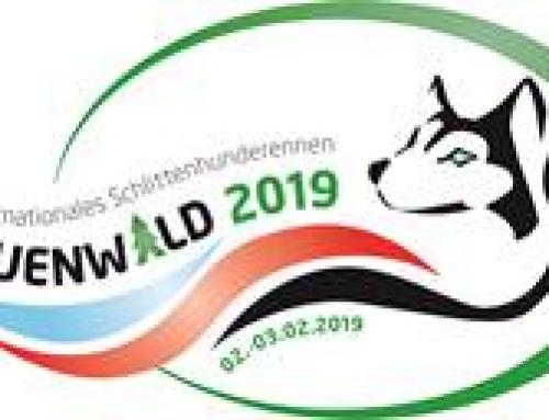 Schlittenhunderennen Frauenwald 2019