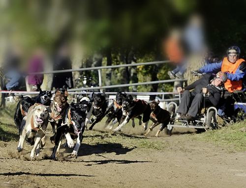 Ausschreibung Deutsche Meisterschaft Dryland 2019 Tierpark Ströhen
