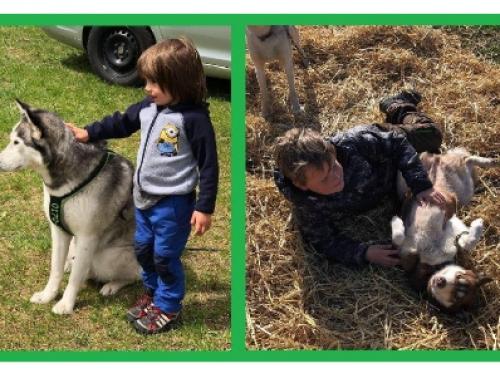 """Sommerferienprogramm """"Ein Tag mit Schlittenhunden"""" 10.08.2019"""